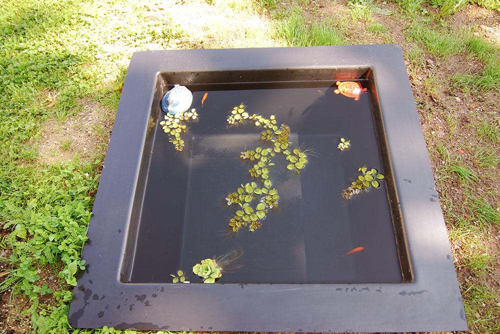 teichpflanzen und bepflanzung f r gartenteiche. Black Bedroom Furniture Sets. Home Design Ideas
